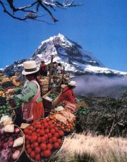 Ecuador: the Andes and Indian markets